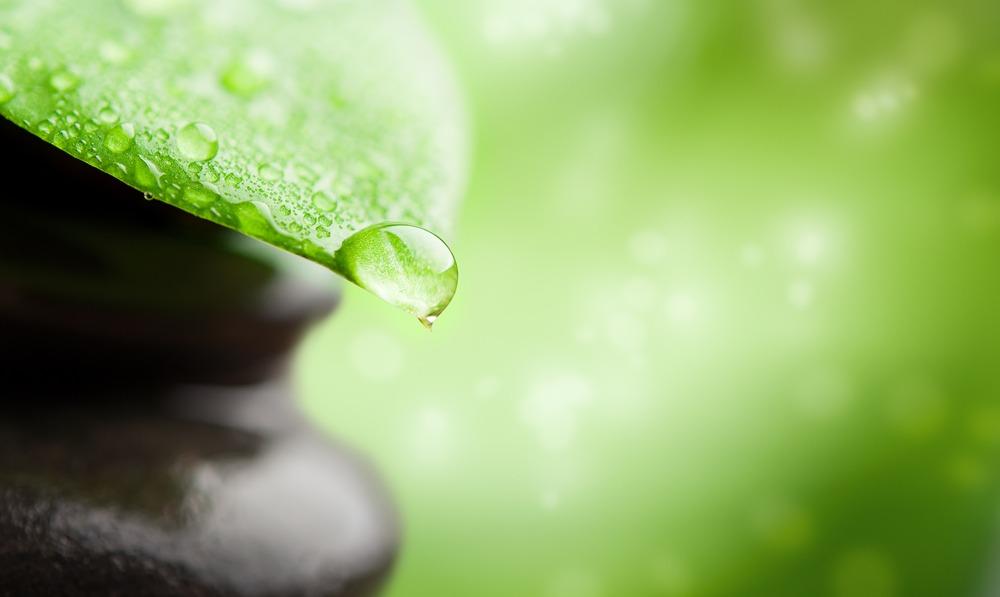 plant base bioactives